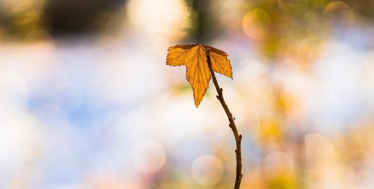 leaf-1814934_19202